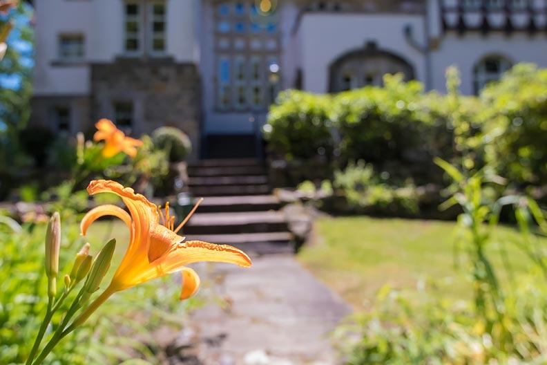 Blume vor dem Landhaus